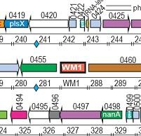 Venter-Synthetic-Bacteria-Watermark-Diagram