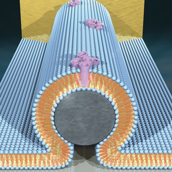 Transistor-Zoom
