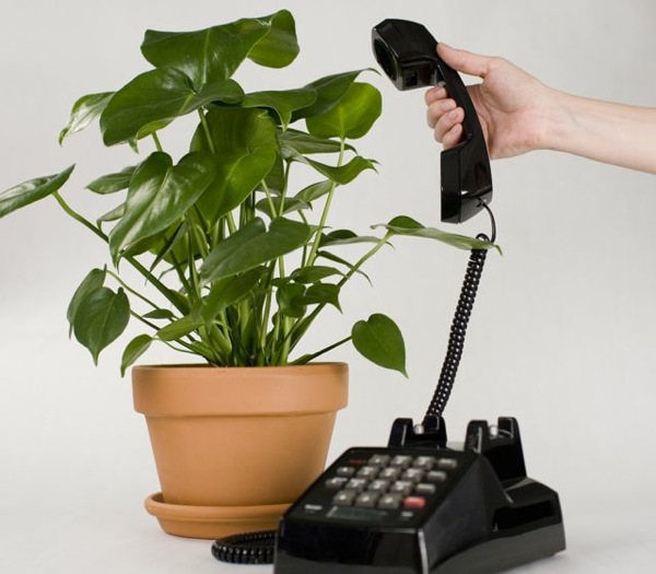 Botanicalls-Plantcall