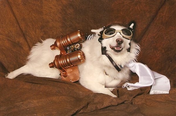 Blitzen-the-steampunk-dog-costume