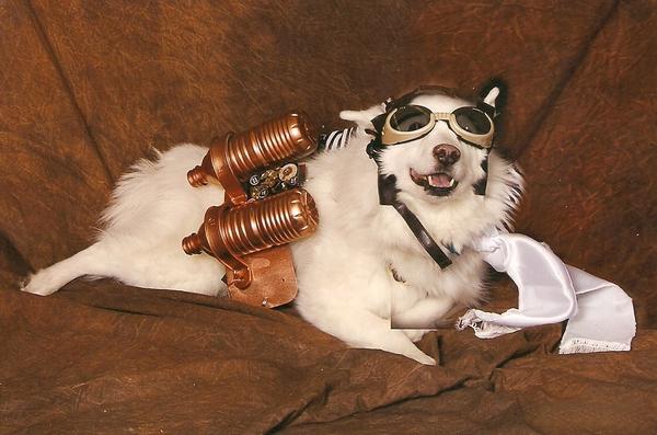 Blitzen-the-steampunk-dog-costume