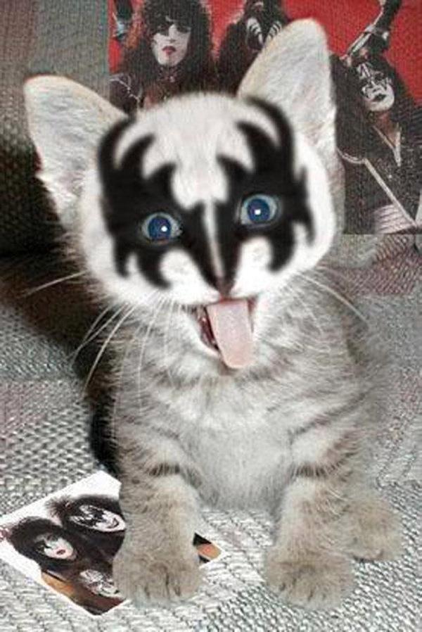 Kiss Kitten