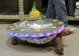 Turtle UFO