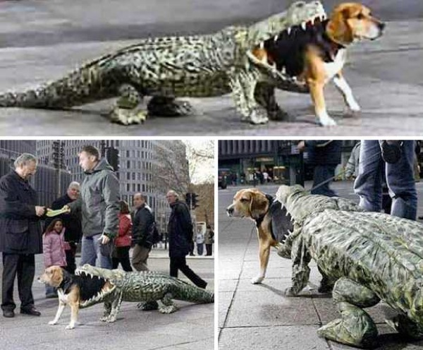 Dog costume being eaten by an alligator