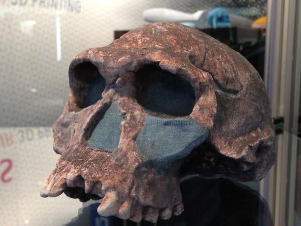 3DprintedSkull