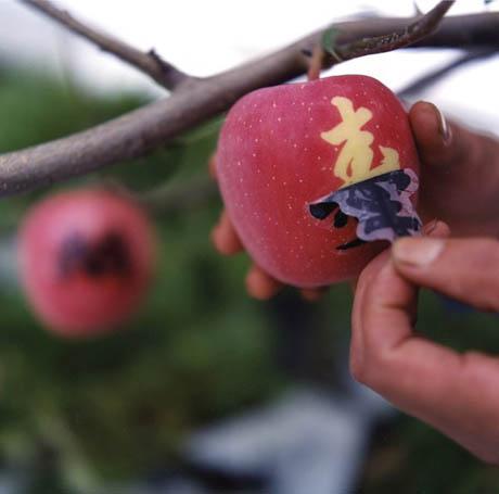 sun-printed-apples