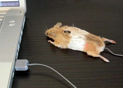 Mouse-Mouse