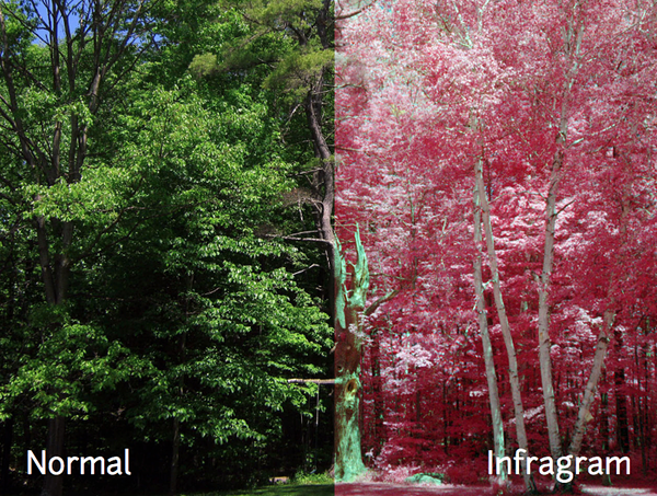 Raspi Infragram Cameras Let People See Plants In A Different Light Piday Raspberrypi