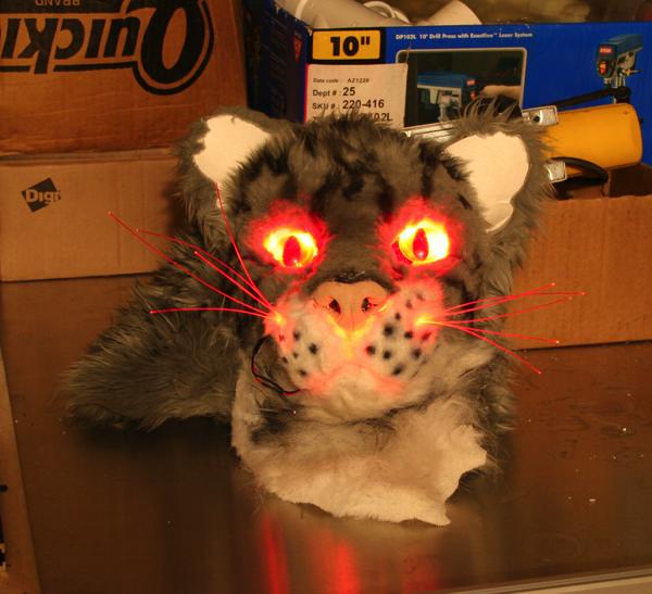 kortright-kitty1