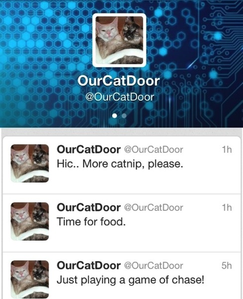 OurCatDoorTwitPage