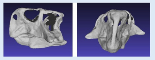 3ders org 3D scanners found three species of dinosaur are just one 3D Printer News 3D Printing News