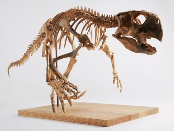The Childrens Museum of Indianapolis Psittacosaurus skeleton cast