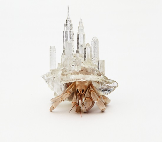 Hermit crab 3d printed house 4