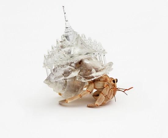 Hermit crab 3d printed house 8