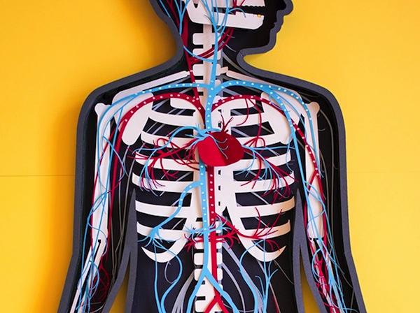 Teaching Anatomy Through Paper Cut