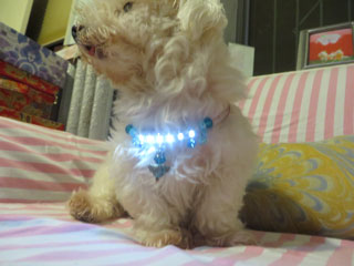 ito-dog-collar