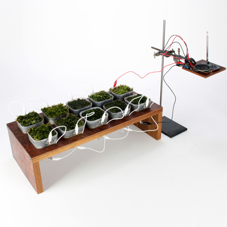 Worlds-first-moss-powered-radio_dezeen_1sq