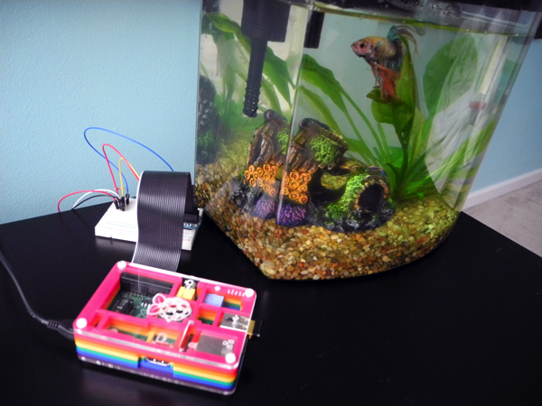 The quantified fish an aquarium featuring raspberry pi