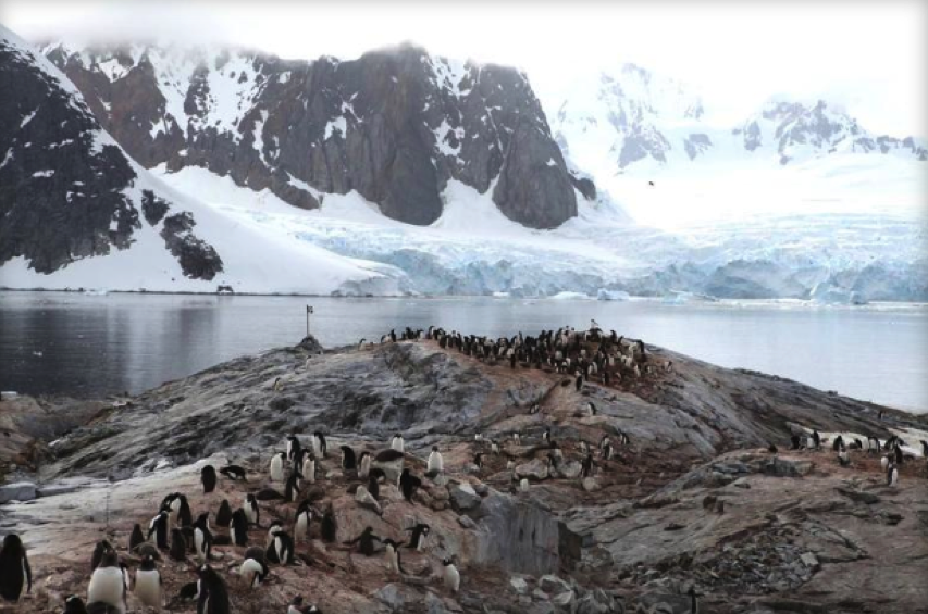 Antarctica penguin pics beamed by satellite CNET