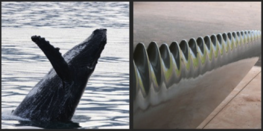 7 examples of biomimicry Whale Turbine MNN Mother Nature Network