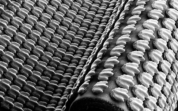 Artificial Shark Skin