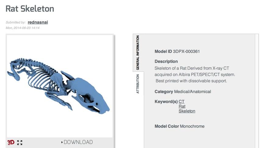 Rat Skeleton NIH 3D Print Exchange