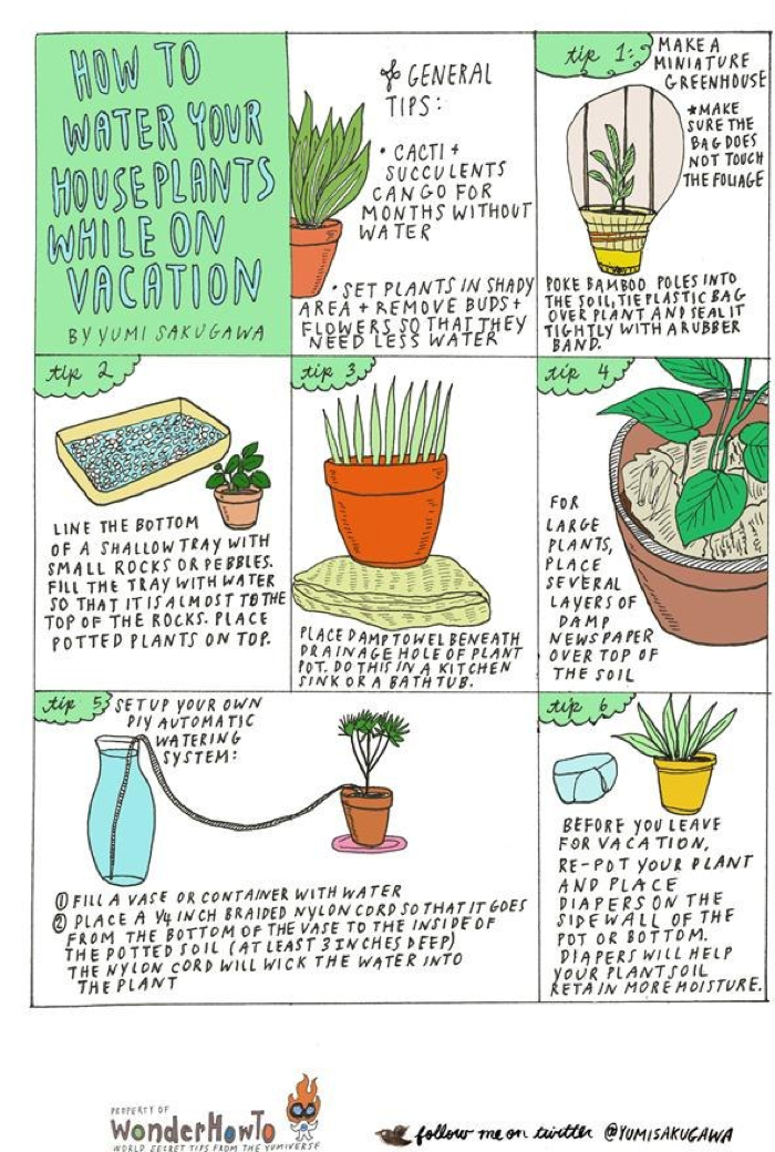 How To Water Your Plants While You Re On Vacation