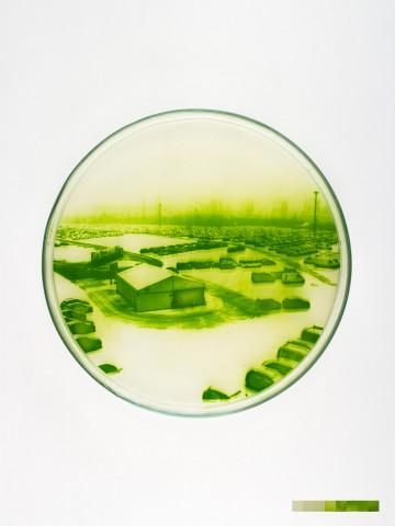 algae-graphs-2