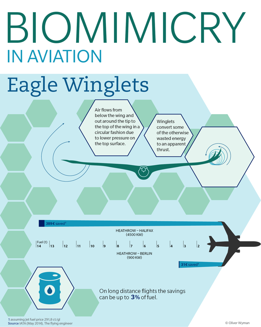 Eagles Wings Inspire More Fuel Efficient Planes Biomimicry Plane Wing Diagram