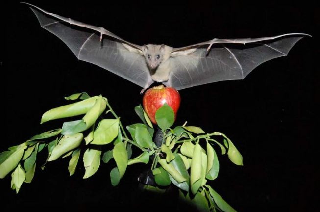 Bats donuts and a compass scientists discover how animals orient themselves The Verge