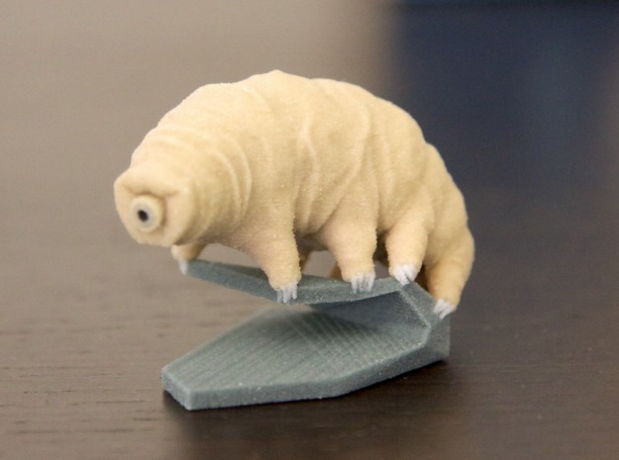 Follow up: Here's a 3D printed Tardigrade (Water Bear) by EricHo on ...
