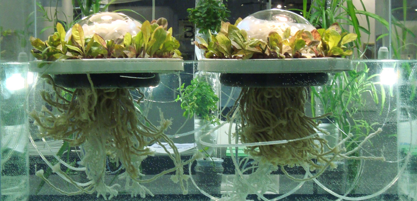 Floating Greenhouse Uses Solar Distillation To Cultivate