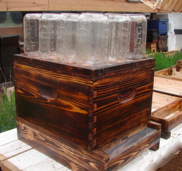 Make Your Own Beehive In A Jar