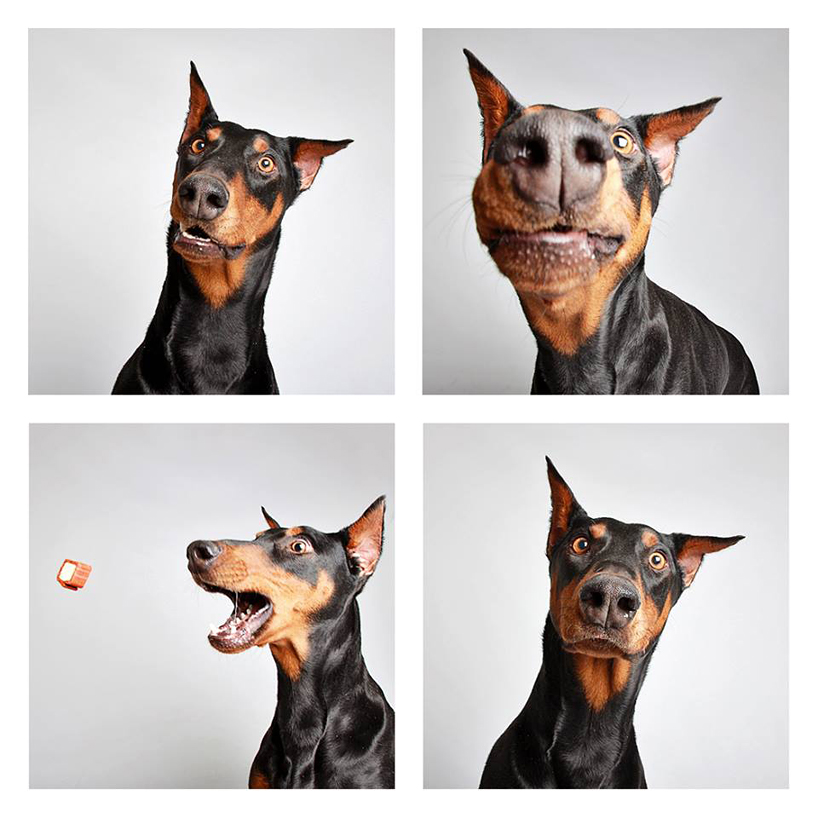 Guinnevere shuster dogs in a photo booth humane society of utah designboom 02