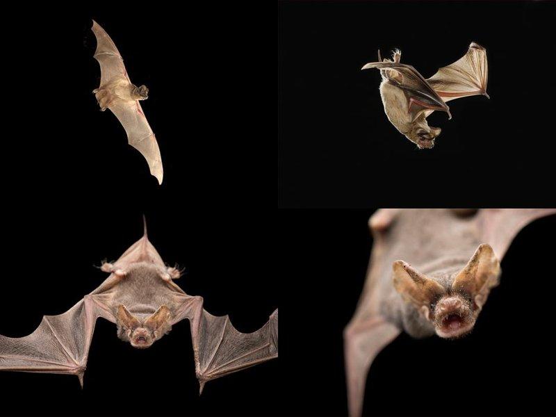 Phenom bats jpg 800x600 q85 crop