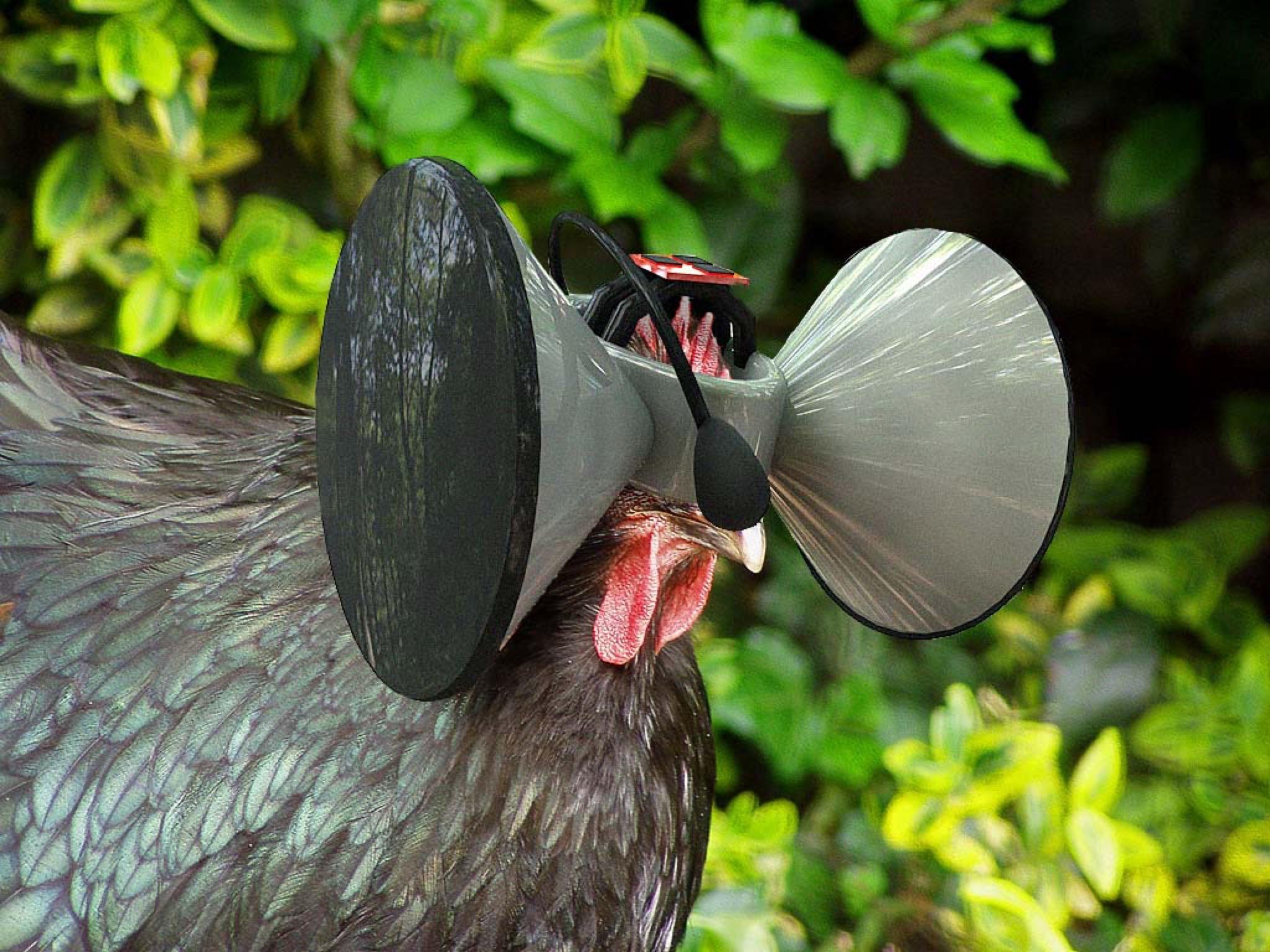 Chicken Vr