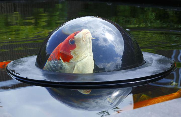 FloatingFishDome