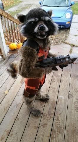 Rocket Raccoon costume