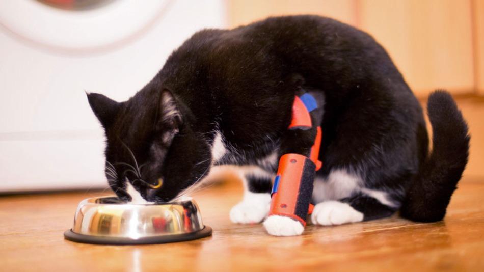 disabled cat