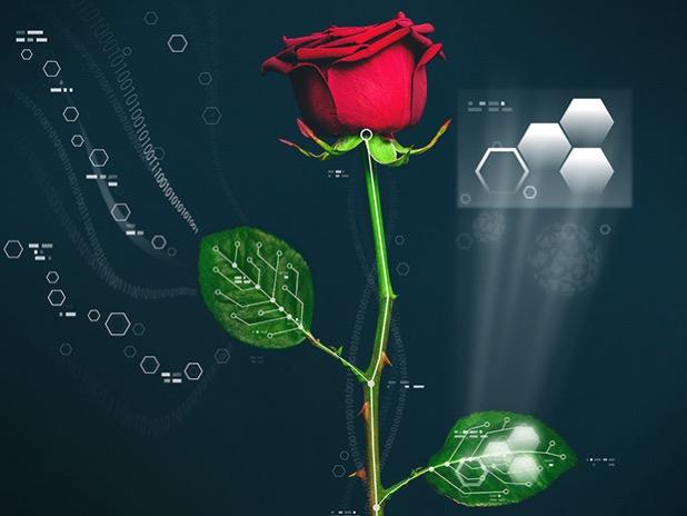 Electronic rose 1447867742855