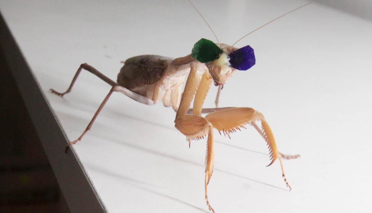 la-sci-sn-praying-mantis-3d-glasses-20160108