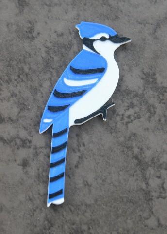 multicolor bird