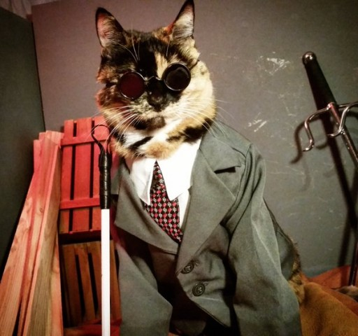 Cat cosplay - daredevil