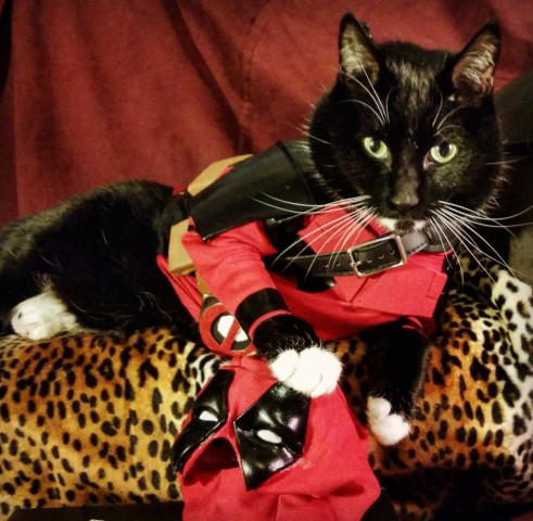 Cat cosplay - deadpool