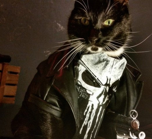 Cat cosplay - punisher