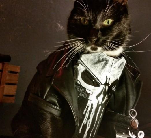 Cat cosplay - punisher