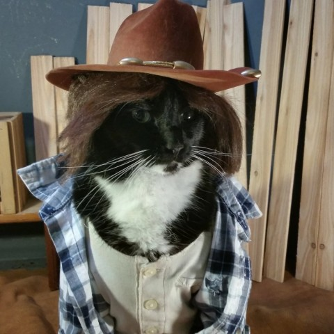 Cat cosplay - walking dead