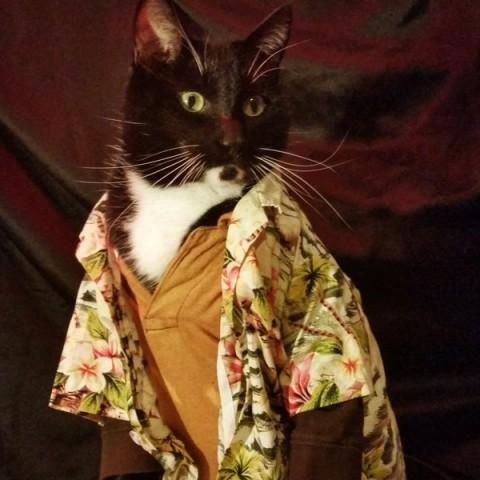 Cat cosplay - wash