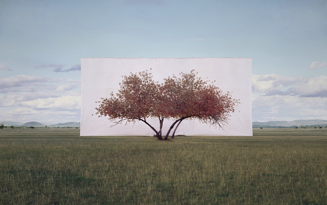 Large myoung ho lee tree 2 2011