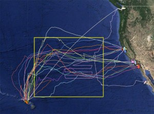transects-pacific